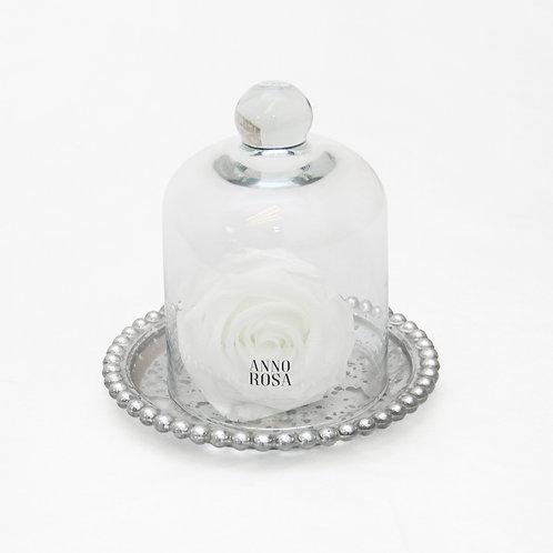 ANTIQUE BELLE SINGLE INFINITY ROSE - WHITE