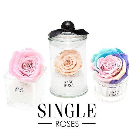 SINGLE ROSES.jpg