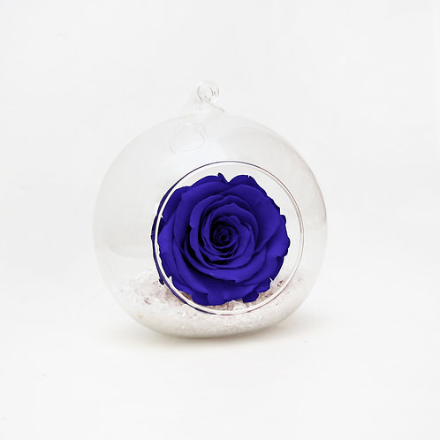 Sapphire Blue Preserved Rose that lasts a year