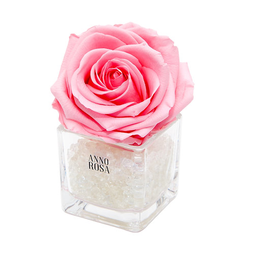 SINGLE INFINITY ROSE - PINK