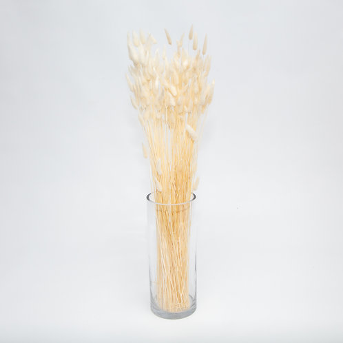 NATURAL WHITE LAGURUS BUNNY TAILS  (STEMS ONLY NO VASE