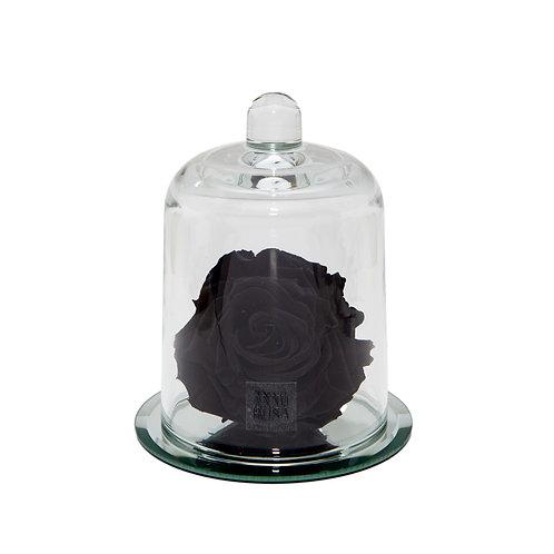 DELUXE BLACK MIRROR BELLE SINGLE INFINITY ROSE