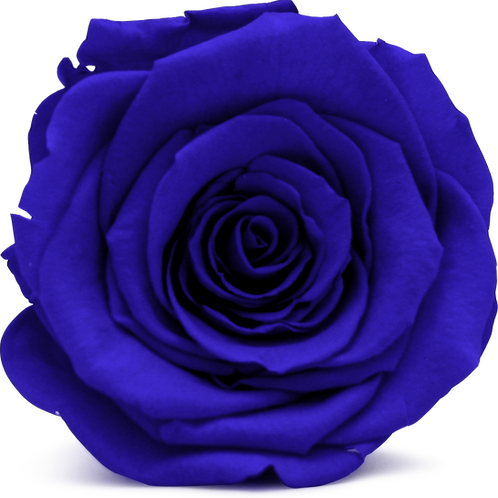 SAPPHIRE ROSE REPLACEMENT