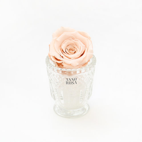 Peach Eternity Rose That Lasts a Year
