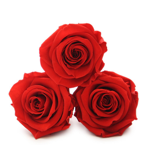 INFINITY ROSES - RED