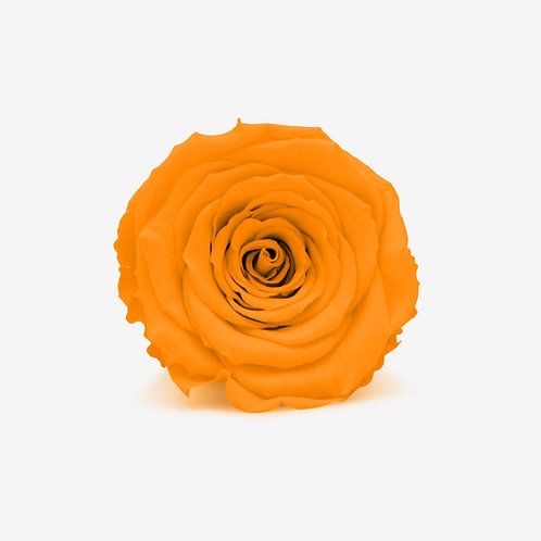 Orange Eternity Rose