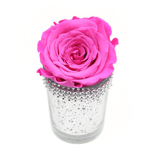 Fuchsia Pink Infinity Rose that lasts a year