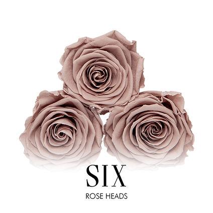 BOX OF 6 ROSE HEADS.jpg