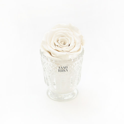 Ivory Eternity Rose That Lasts a Year