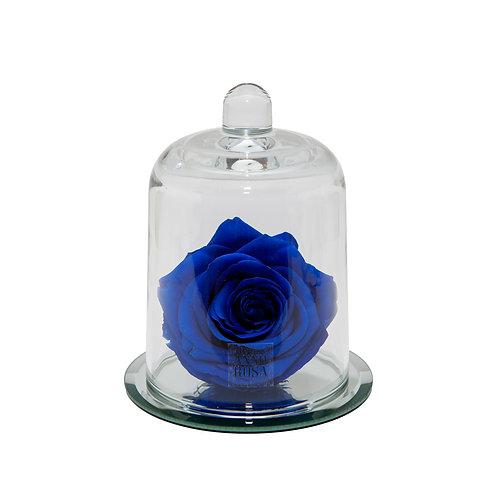 DELUXE SAPPHIRE MIRROR BELLE SINGLE INFINITY ROSE