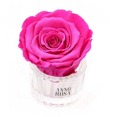 ELEGANT INFINITY ROSE - FUCHSIA PINK