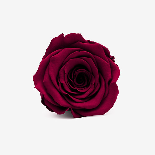 Wine Preserved Infinity Rose That Lasts A Year