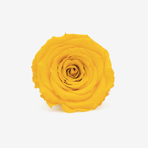 Yellow Preserved Infinity Rose That Lasts A Year