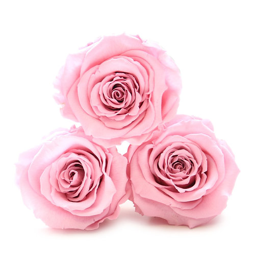 INFINITY ROSES - PINK