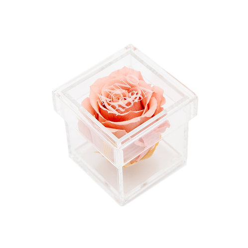 BLUSH INFINITY ROSE AMOUR COLLECTION