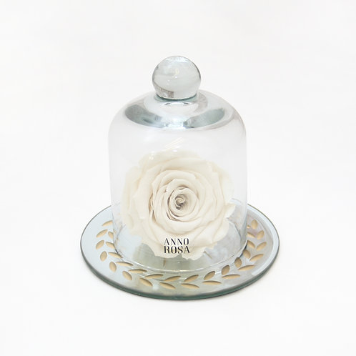Ivory Eternal Preserved Rose that lasts a year