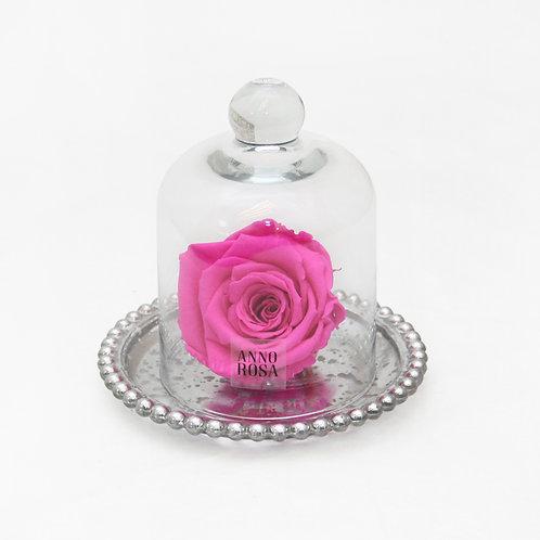 ANTIQUE BELLE SINGLE INFINITY ROSE - FUCHSIA