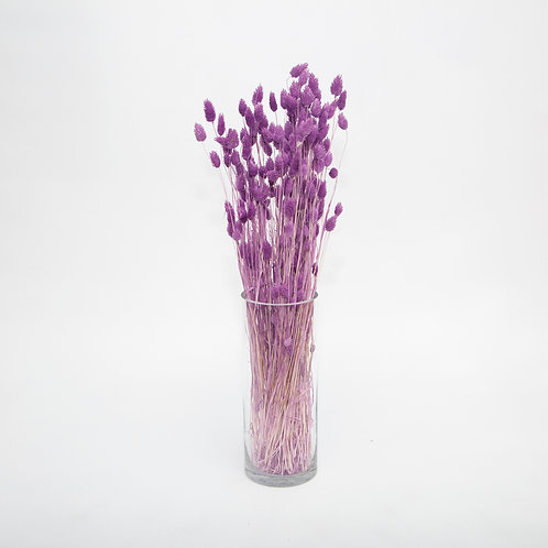 PURPLE PHALARIS  (STEMS ONLY NO VASE)