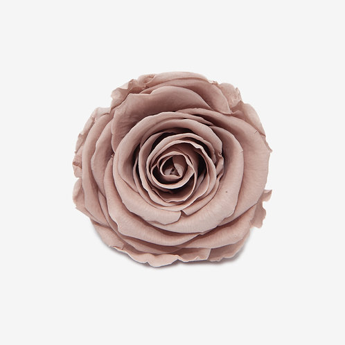 MINK ROSE REPLACEMENT