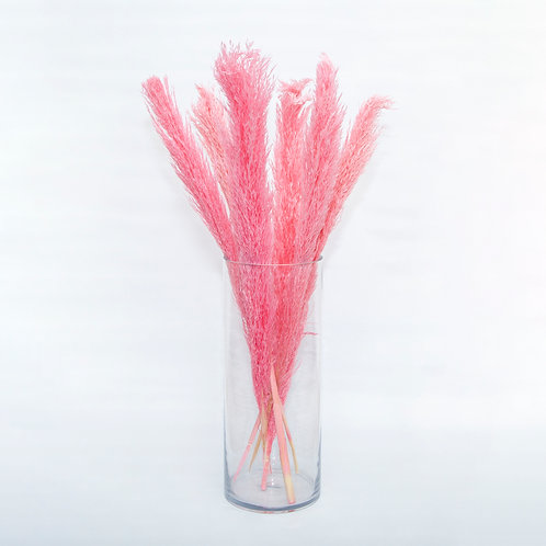 PINK CLASSIC PAMPAS  – CANA SILVESTRE – 120CM (STEMS ONLY NO VASE)