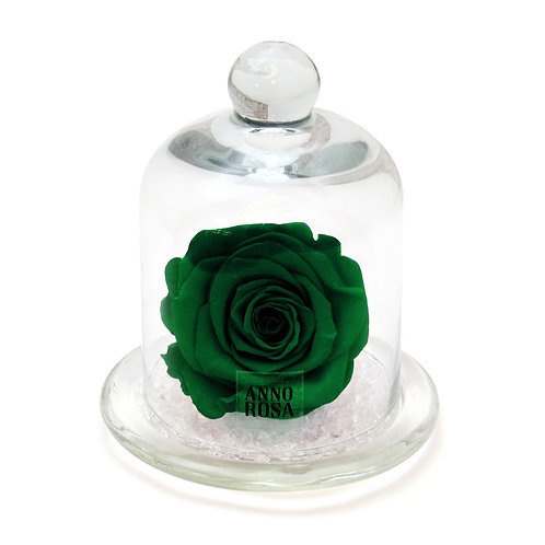 CLASSIC BELLE SINGLE INFINITY ROSE - GREEN