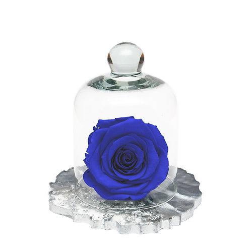 RESIN BELLE SINGLE INFINITY ROSE - SAPPHIRE