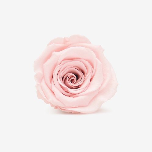 Pink Preserved Infinity Rose That Lasts A Year