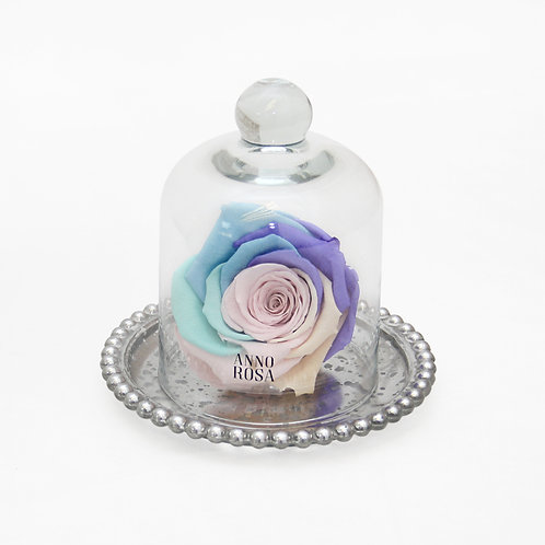 Rainbow Eternity Rose That Lasts A Year