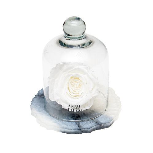 MARBLE BELLE SINGLE INFINITY ROSE - WHITE