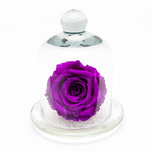 CLASSIC BELLE SINGLE INFINITY ROSE - VIOLET