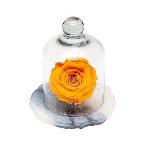 MARBLE BELLE SINGLE INFINITY ROSE - ORANGE
