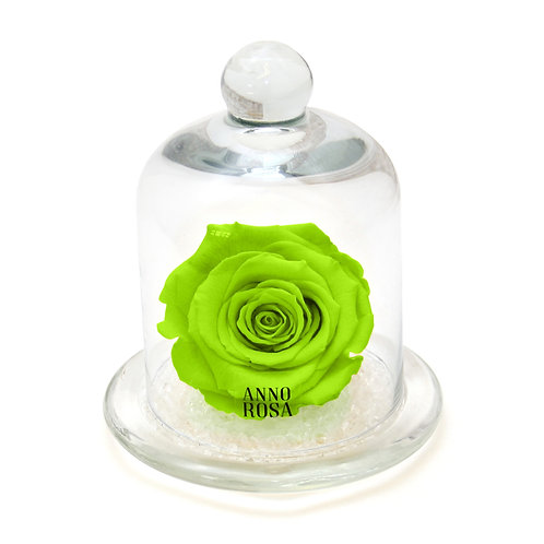 CLASSIC BELLE SINGLE INFINITY ROSE - BRIGHT GREEN