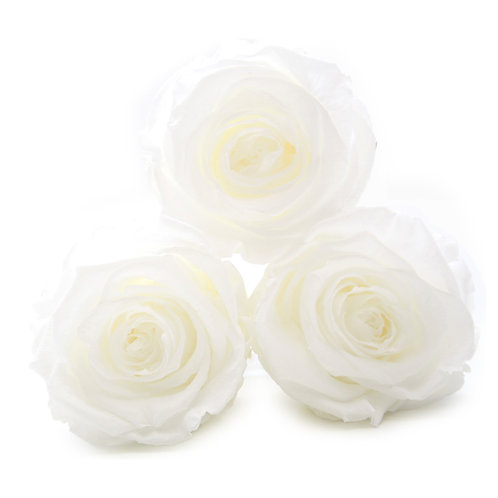 INFINITY ROSES - WHITE