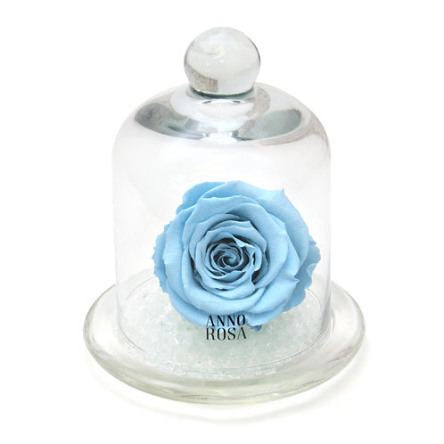 CLASSIC BELLE SINGLE INFINITY ROSE - BABY BLUE
