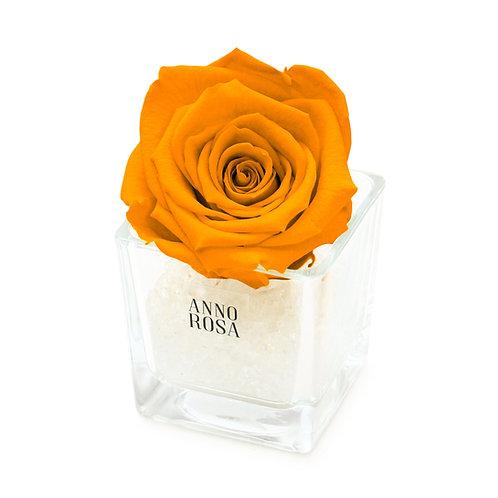 SINGLE INFINITY ROSE - ORANGE
