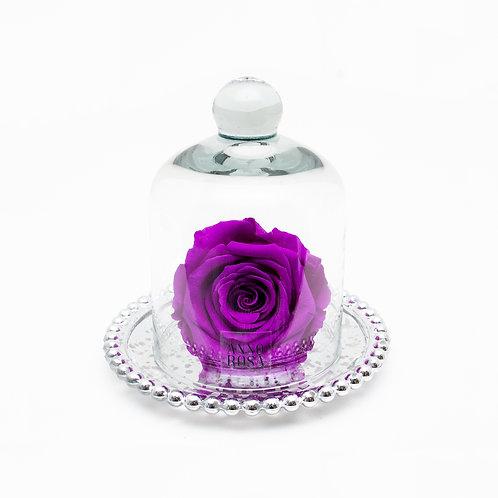 ANTIQUE BELLE SINGLE INFINITY ROSE - VIOLET