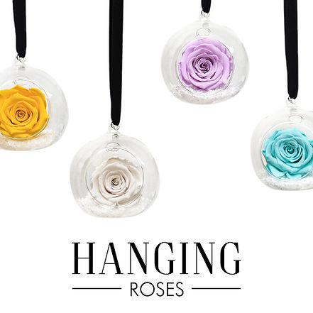 HANGING ROSES.jpg