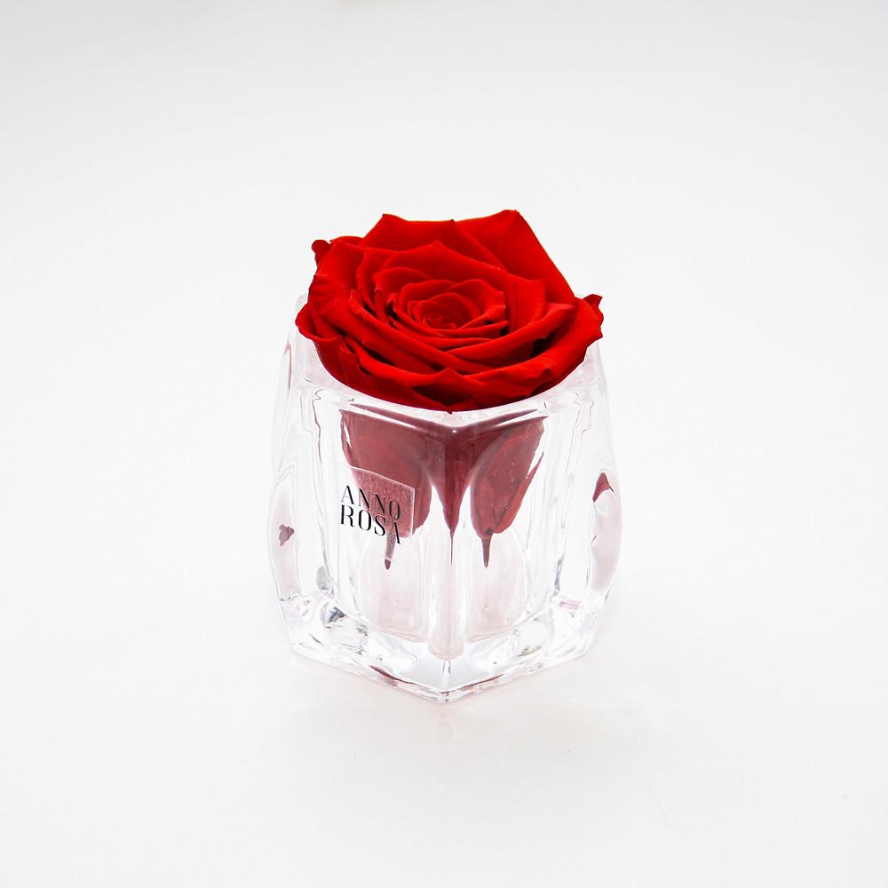 infinity rose, year long roses, red roses, roses, roses that dont die, red roses forever, forever roses, valentines day ideas, valentines day, valentines day idea, ideas for valentines day, valentines day, valentines day, year long roses, forever roses, infinity roses, forever rose, infinity rose, year long rose, forever roses, valentines day gifts for her, valentines day gifts for girlfriend, valentines day gifts for my girlfriend, valentines day ideas, valentines ideas, valentines day 2019