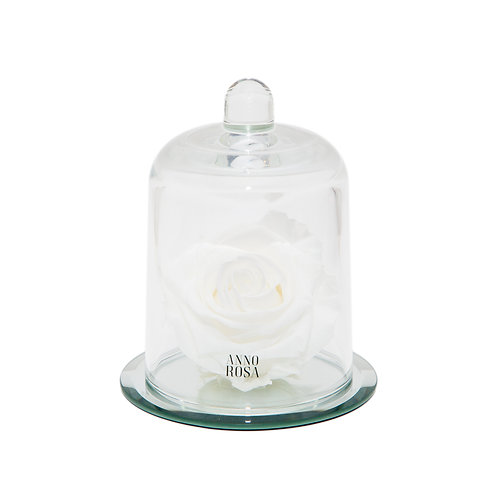 DELUXE WHITE MIRROR BELLE SINGLE INFINITY ROSE
