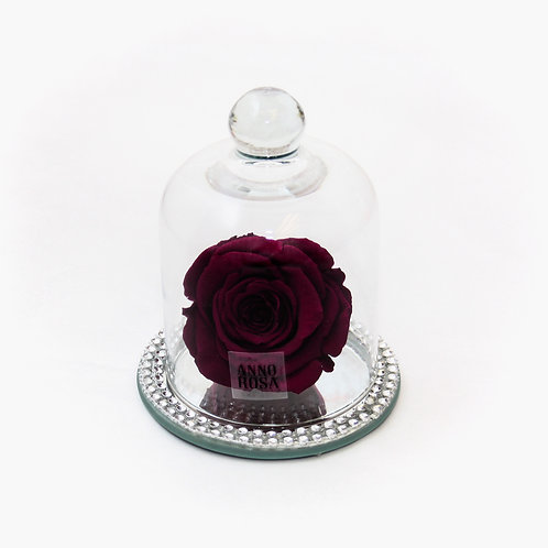 Wine Rose that lasts a year