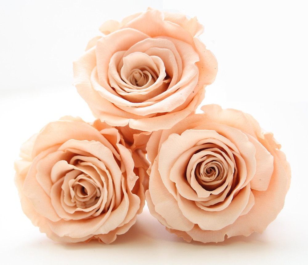 preserved roses, infinity roses, forever roses, year long roses, roses that last a year, home decor ideas, home interior ideas, peach roses, peach decor, mirrored cube, bedroom decor, gift ideas, girls gift idea, gift ideas for girls, christmas ideas, first home