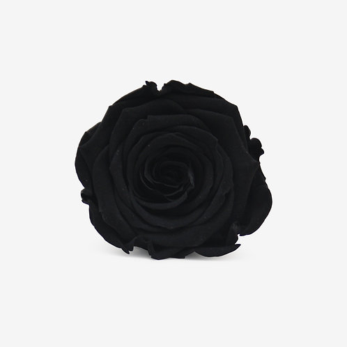 Black Preserved Infinity Rose that lasts a year