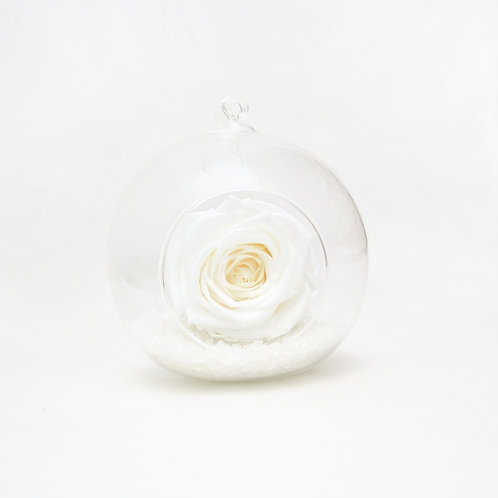 White Rose in Bauble