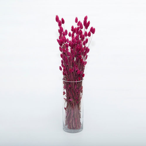 CRANBERRY PHALARIS  (STEMS ONLY NO VASE)