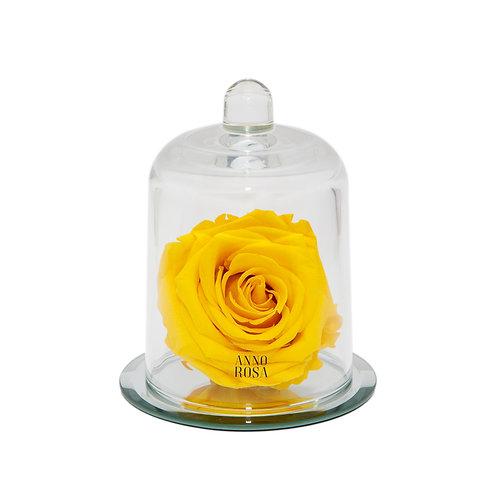 DELUXE YELLOW MIRROR BELLE SINGLE INFINITY ROSE