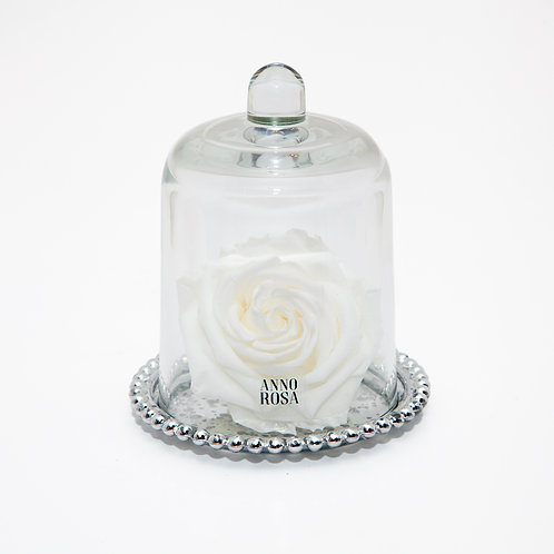 DELUXE WHITE ANTIQUE BELLE SINGLE INFINITY ROSE
