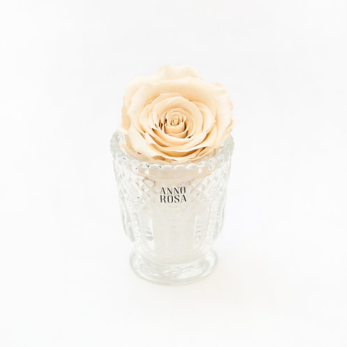 Champagne Eternity Rose That Lasts a Year