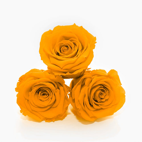 Orange Preserved Roses that last a year