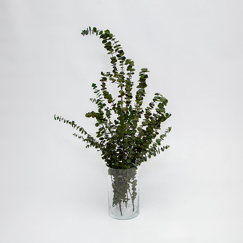 CLASSIC EUCALYPTUS BABY BLUE BUNCH (STEMS ONLY NO VASE)