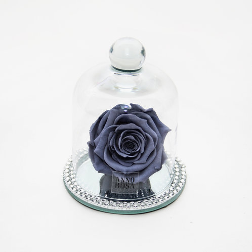 Grey Rose that lasts a year